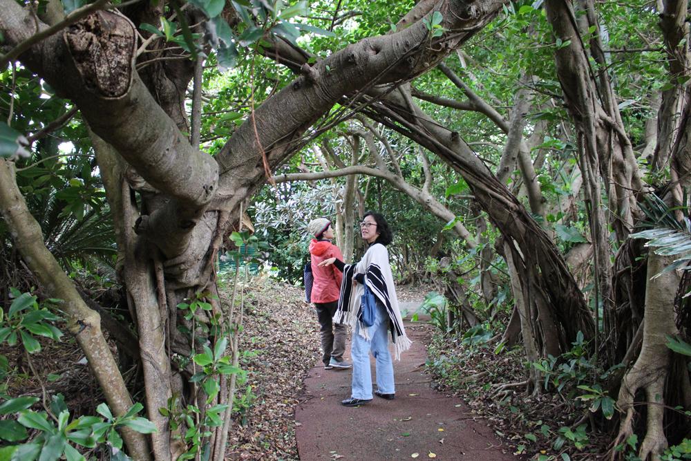 ケンムンの散歩道/ガジュマルのトンネル