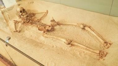 奄美大島の遺跡から太古のロマンを探る「奄美市歴史民俗資料館」