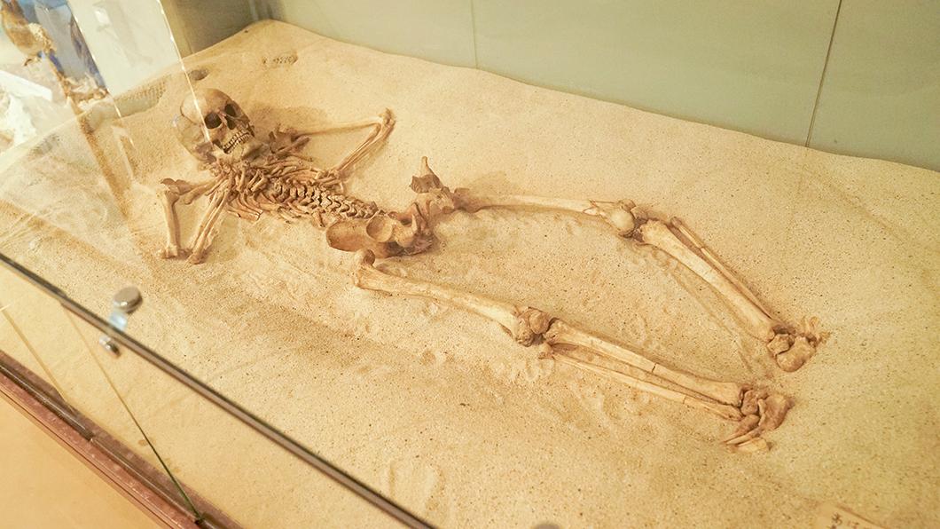 奄美大島の遺跡から発掘された人骨