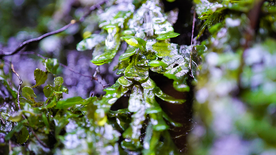 奄美市住用の森の葉