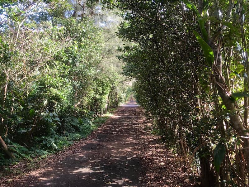 集落のはずれにある小道。両側の防風林の内側には畑が広がっています。
