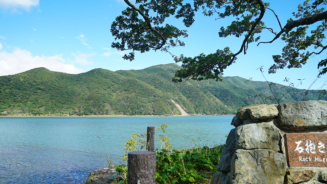 奄美市住用のガジュマルと海