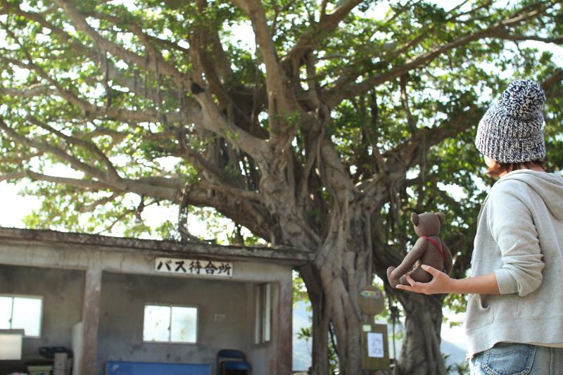 大きなガジュマルの木と宇検村のバス停