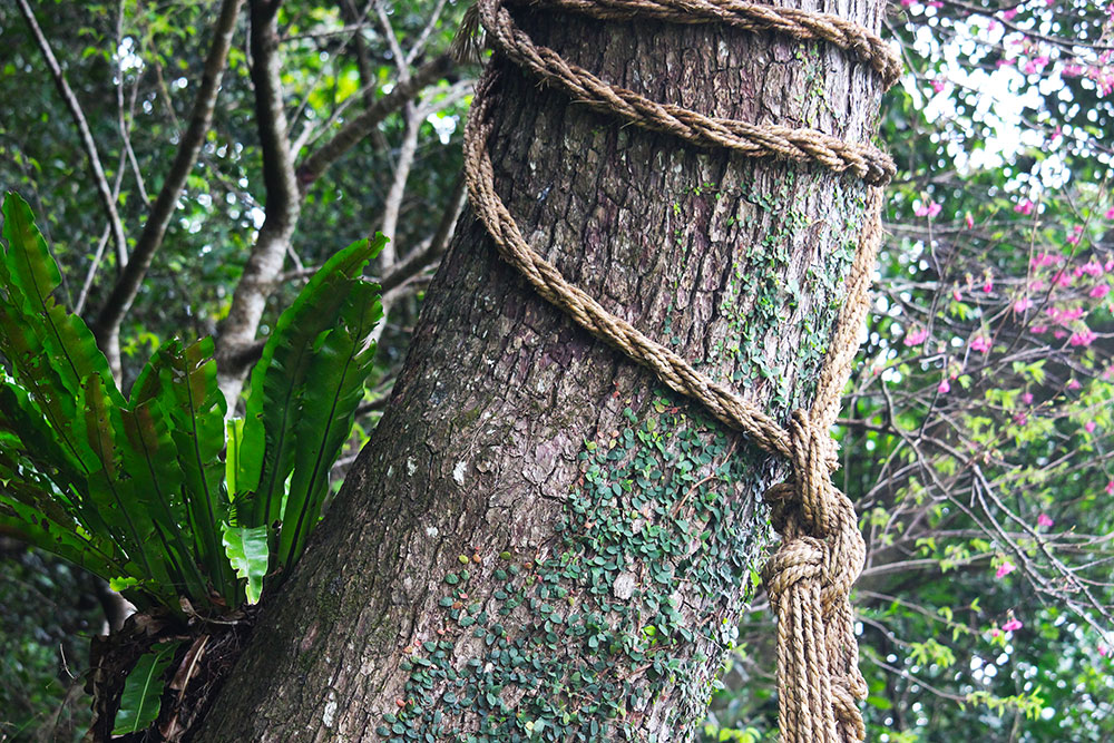縄が縛ってある大きな木