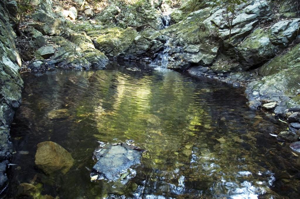 奄美大島酒造がこだわる焼酎づくりの元となる水