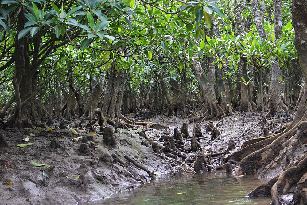 ブラ奄美#5 黒潮の森マングローブパーク