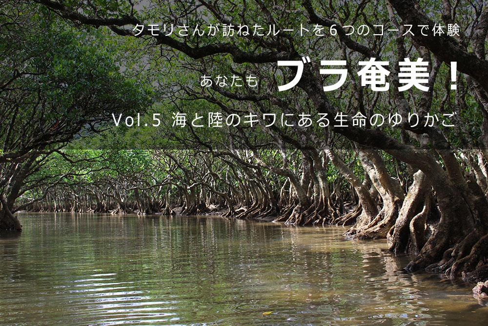 ブラタモリで紹介された奄美大島の黒潮マングローブ