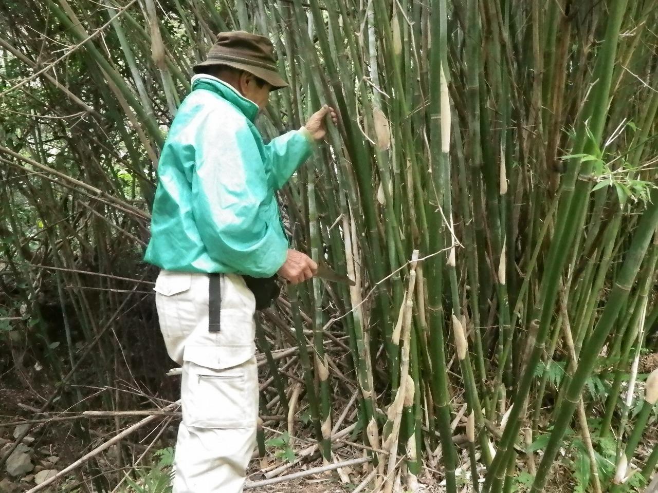 竹を選ぶ永田さん