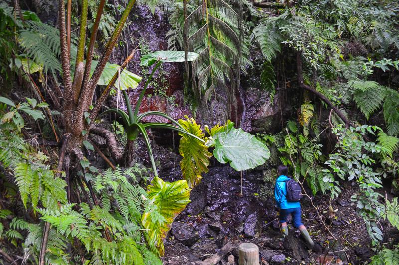植物をつたって水が流れる写真DSC_2855