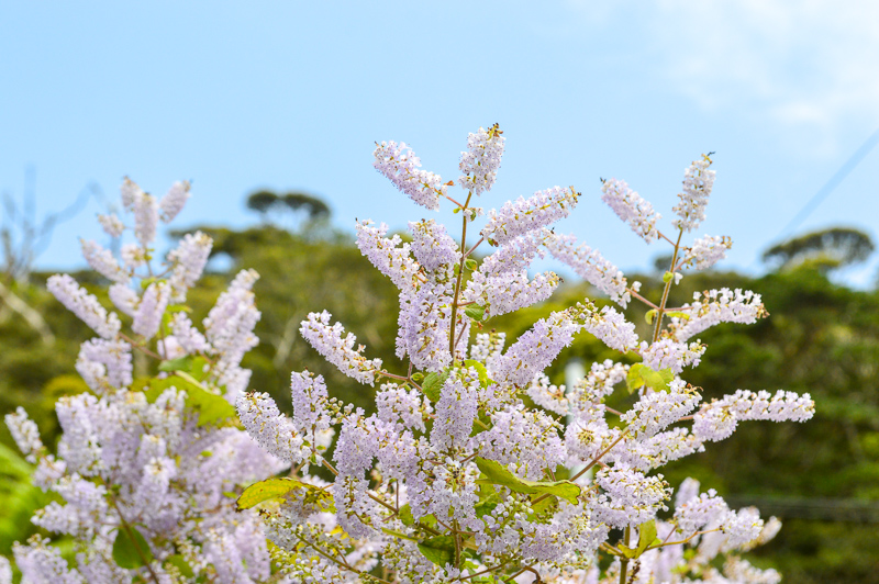 奄美大島龍郷町に咲く植物