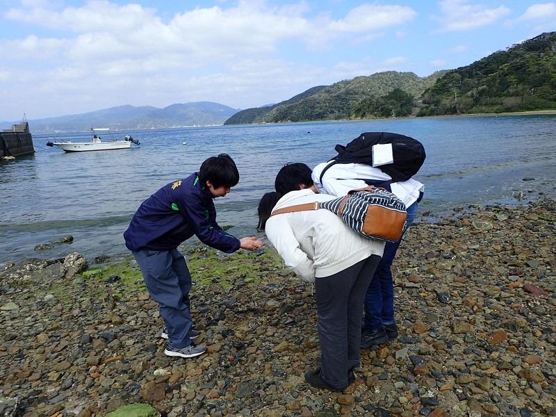 加計呂麻バス海辺の案内