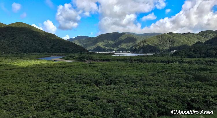 マングローブ原生林と青空の写真P002_09