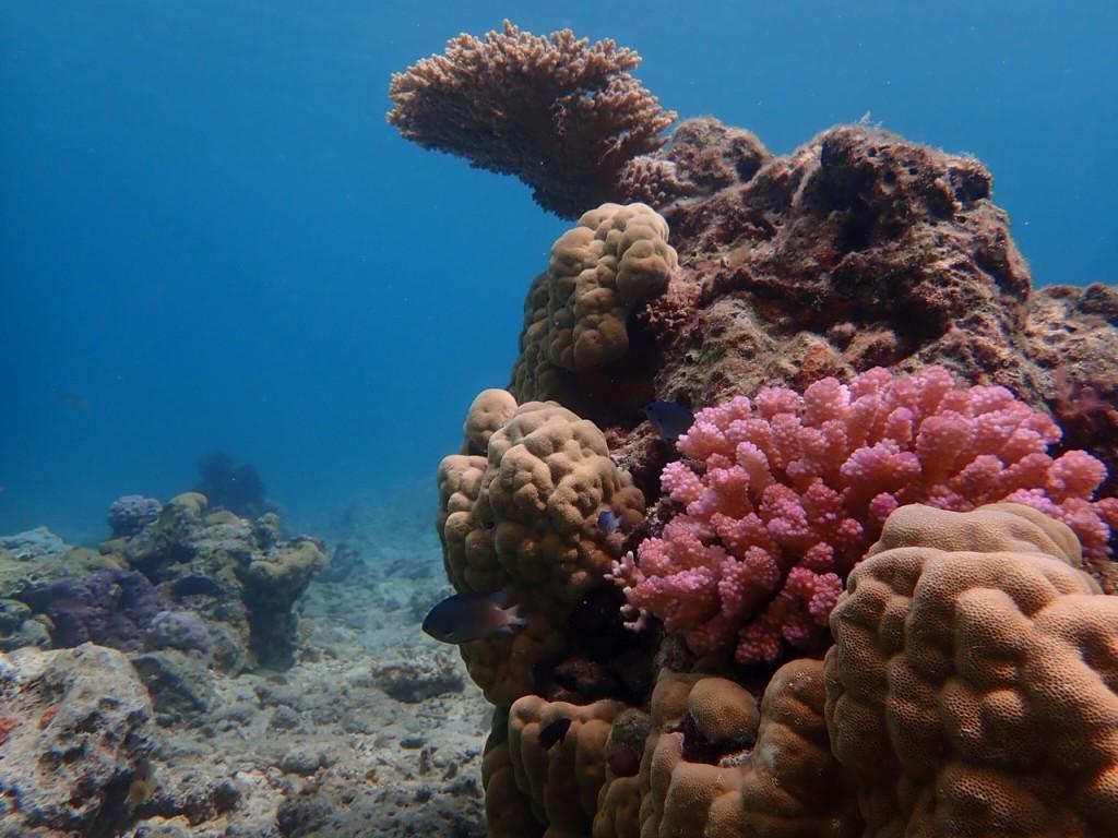 奄美大島のサンゴ礁