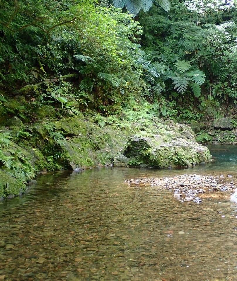 奄美大島の側