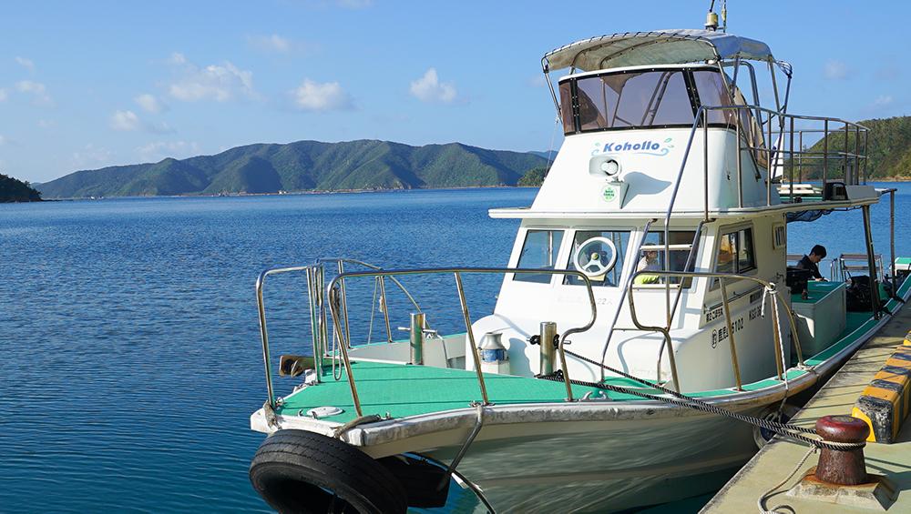 奄美大島スノーケリング:アクアダイブコホロ