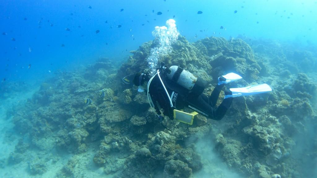 奄美大島の青い海と珊瑚礁