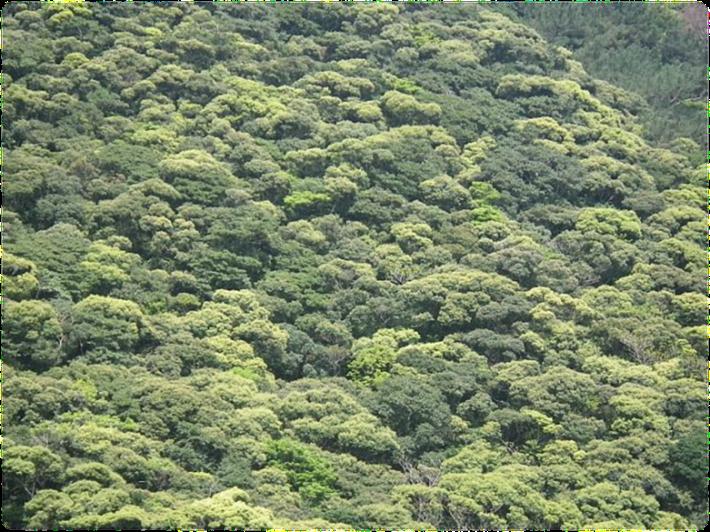 奄美大島の森