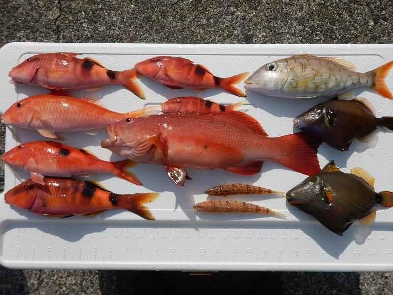 奄美ボブマリン船釣り体験8