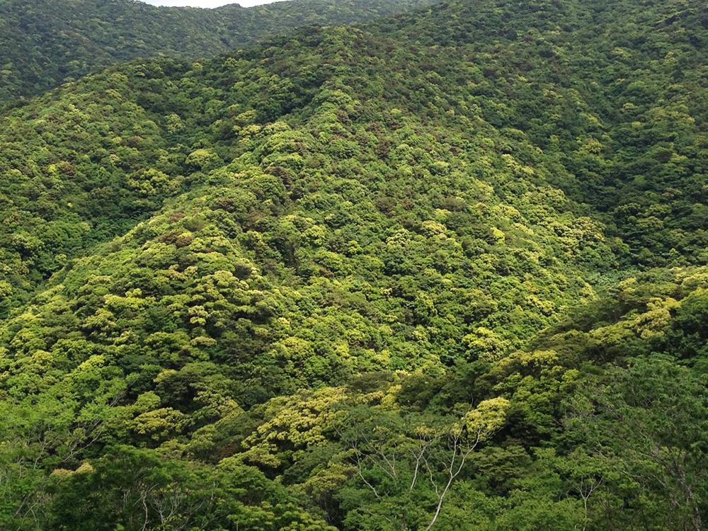 奄美大島の山・森
