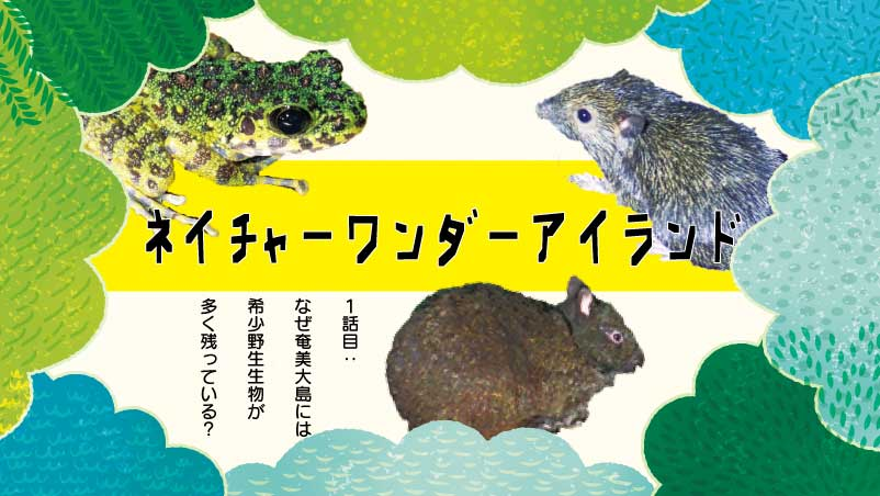 Reads: Nature Wonder-Island Vol. 1-Why does so much rare wildlife remain on Amami?