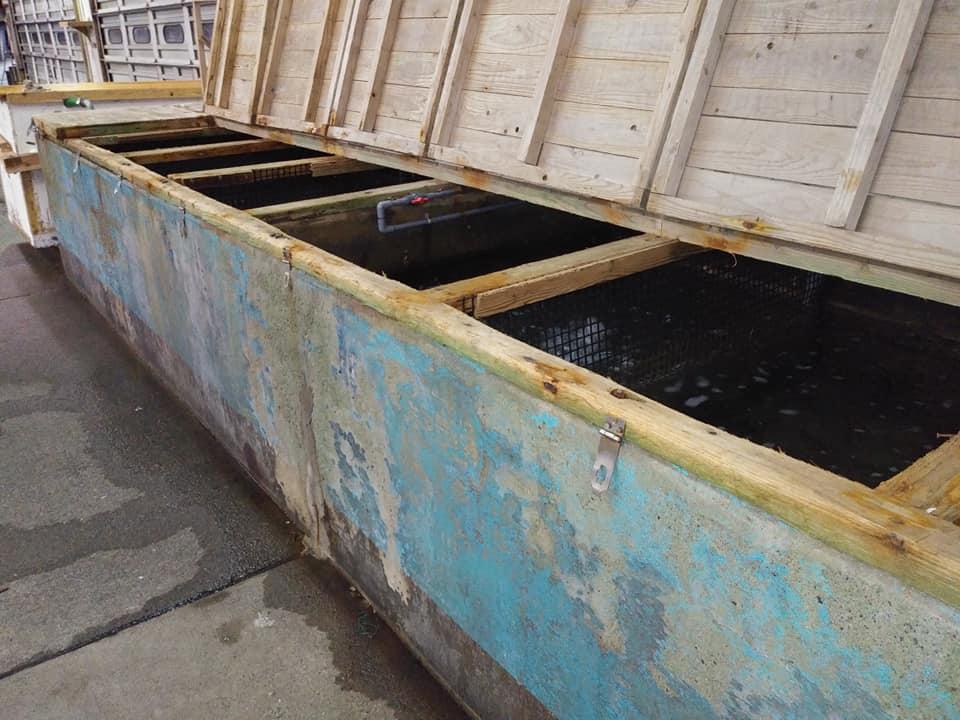 奄美市名瀬の名瀬漁協の伊勢えび用の水槽