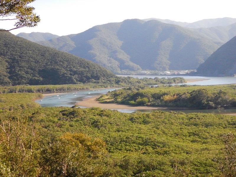 奄美住用のマングローブ林