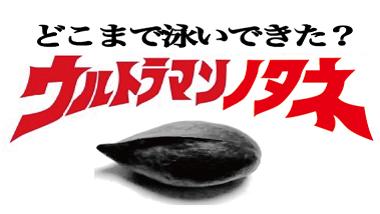 """奄美大島のマングローブからやってきた、""""ウルトラマンの種""""の謎を解明する!"""