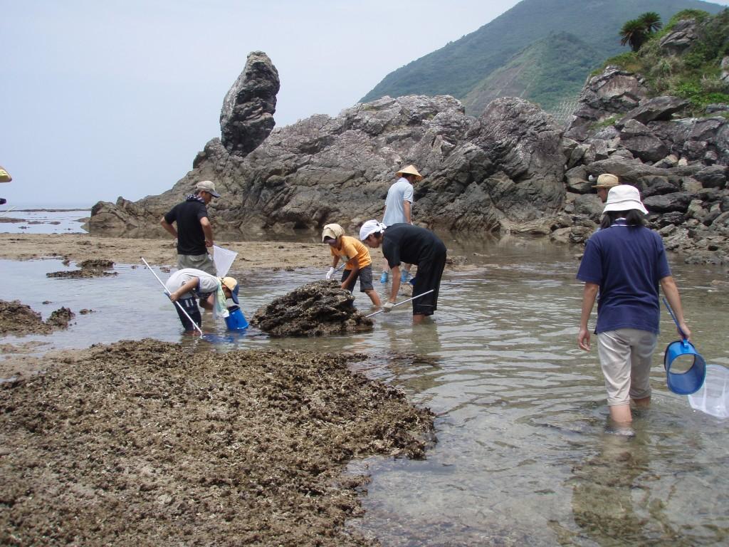 奄美の海で潮干狩り