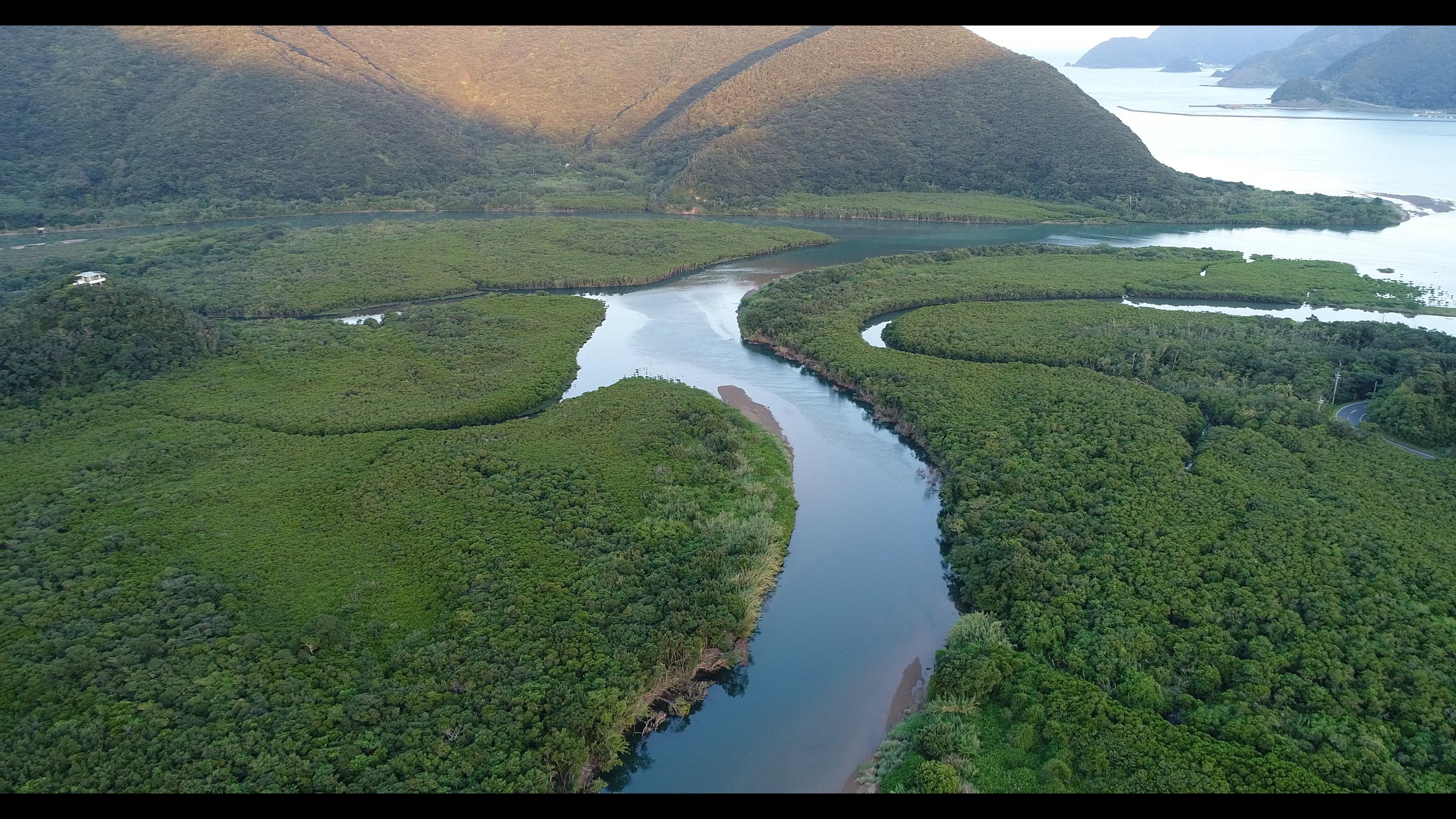 奄美大島 ドローン drone amami マングローブ 住用