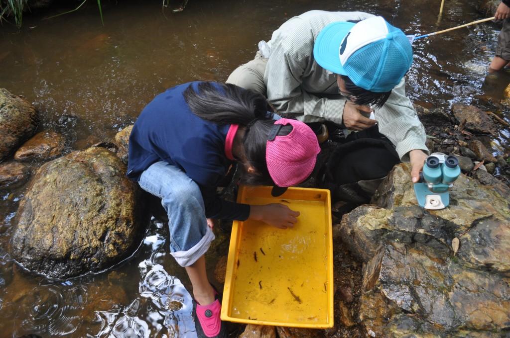 奄美の川で生き物観察