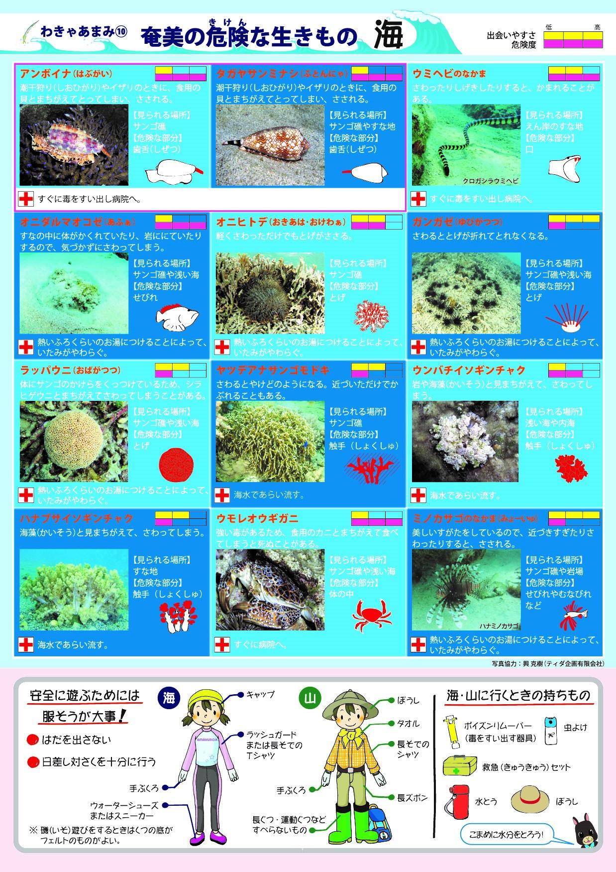 奄美の海の危険生物