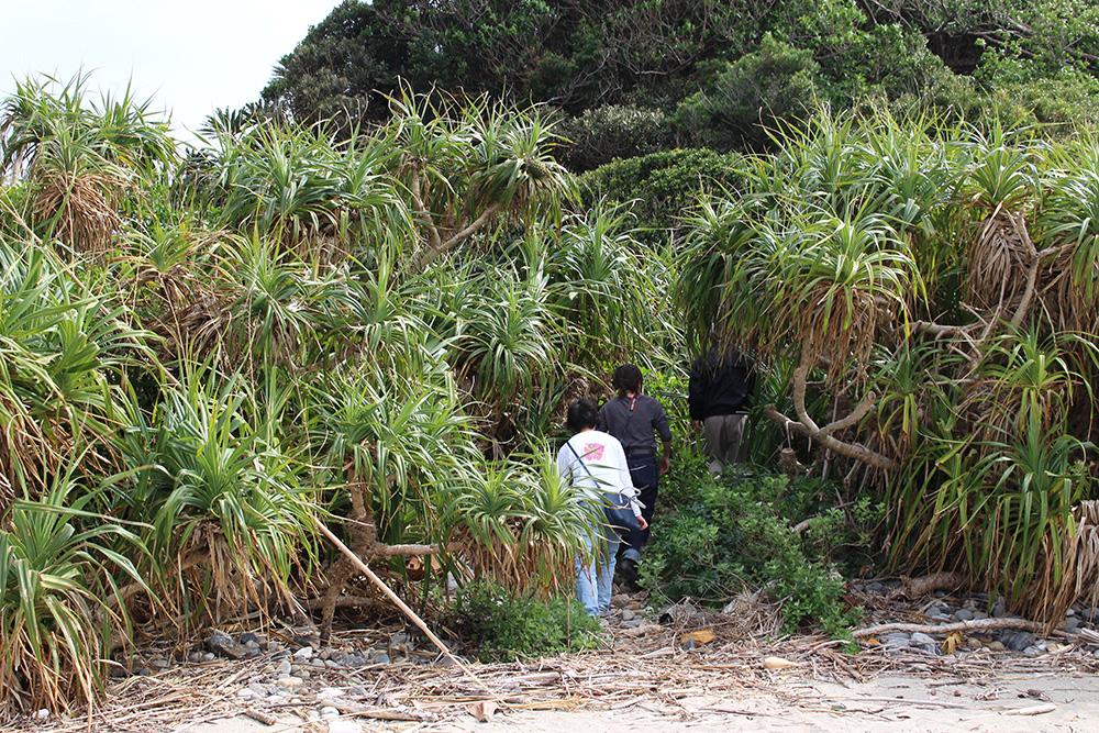 市集落の高浜(ターバマ)を探検しよう