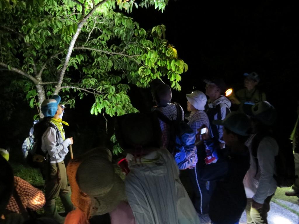 奄美の夜の森で自然観察する人々