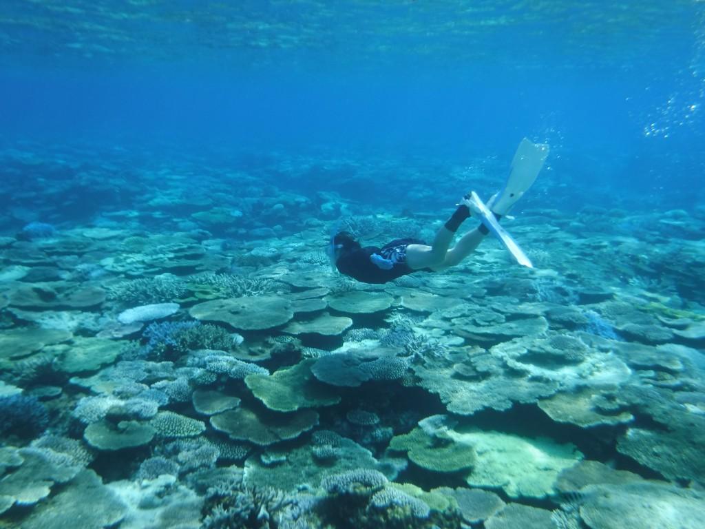 シュノーケリングで見られるサンゴ礁