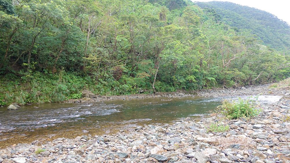 山の裾野に流れる川
