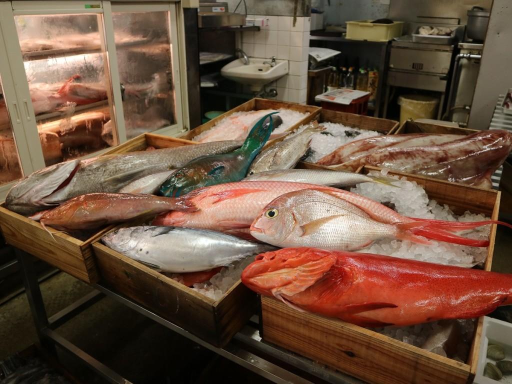 奄美近海で採れた魚