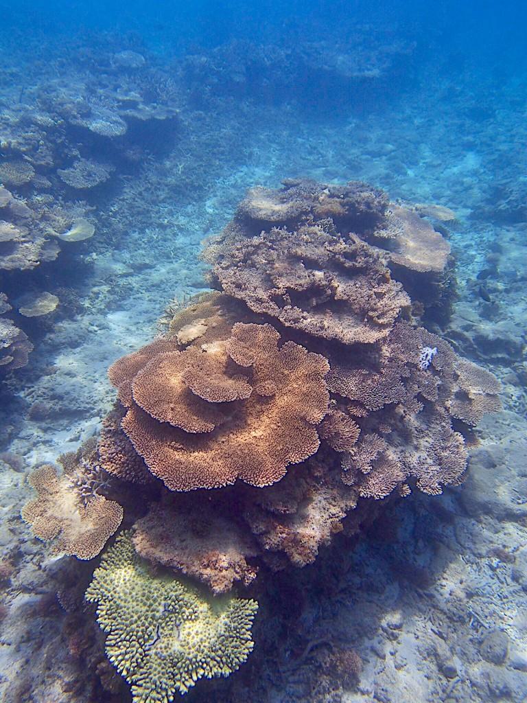 奄美の珊瑚礁