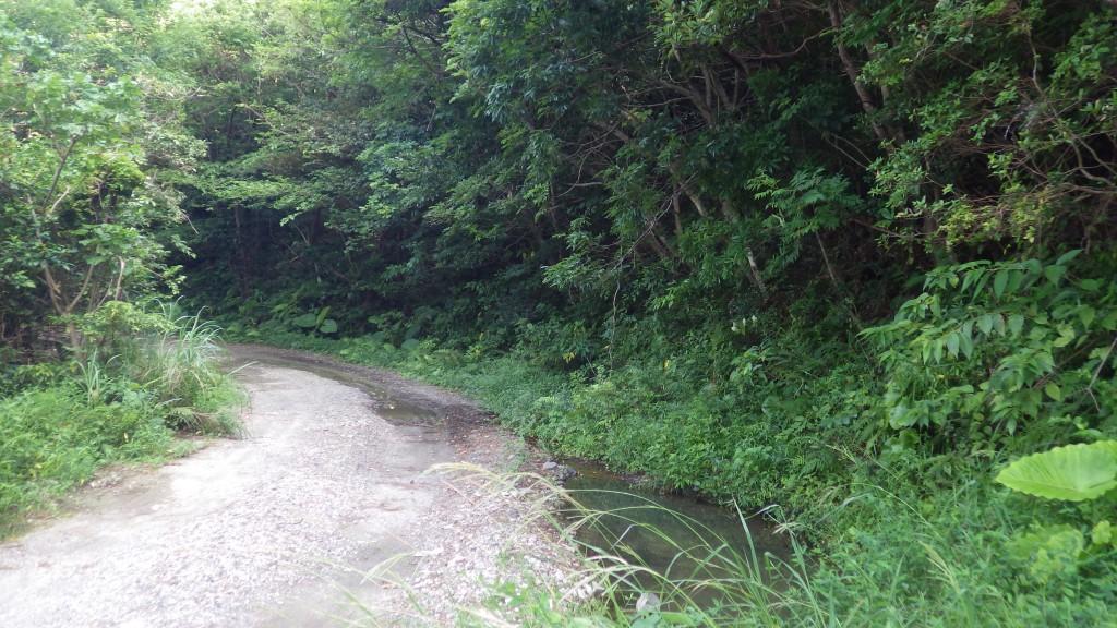 急カーブのある山道