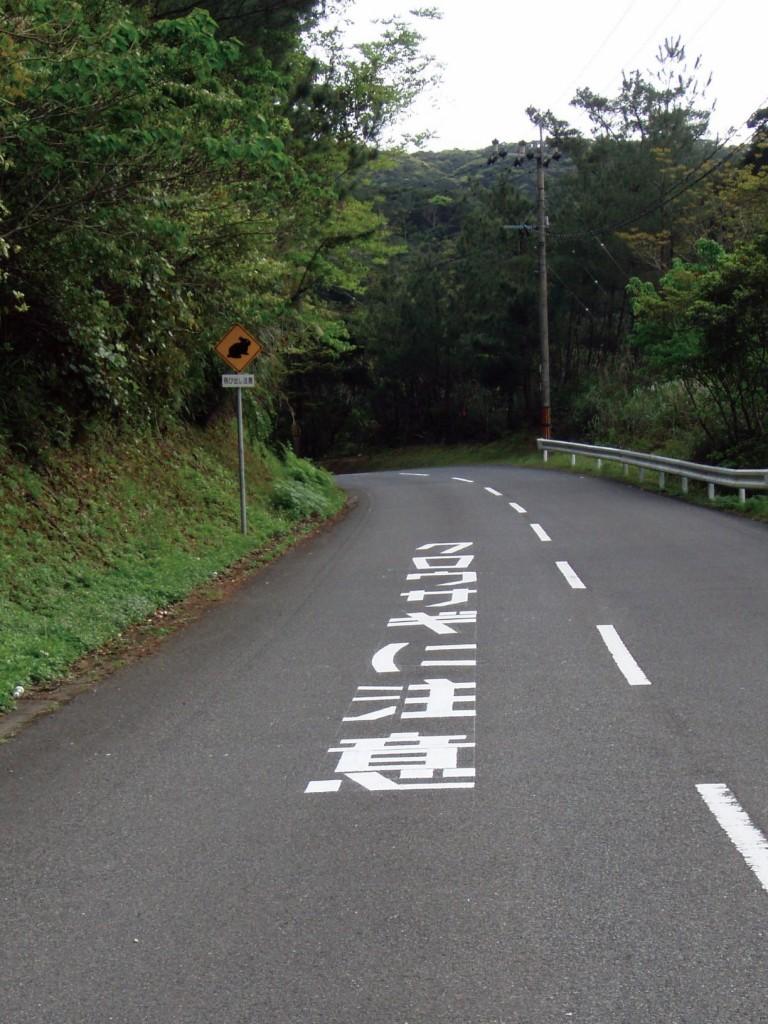 アマミノクロウサギ注意喚起路面標識