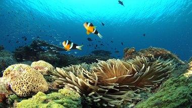 【HOW TO 奄美水中写真;vol.2】大島海峡で楽しく安全に水中写真を撮るには?
