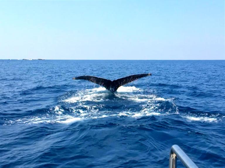 晴れた日のホエールウォッチングで見られたクジラ