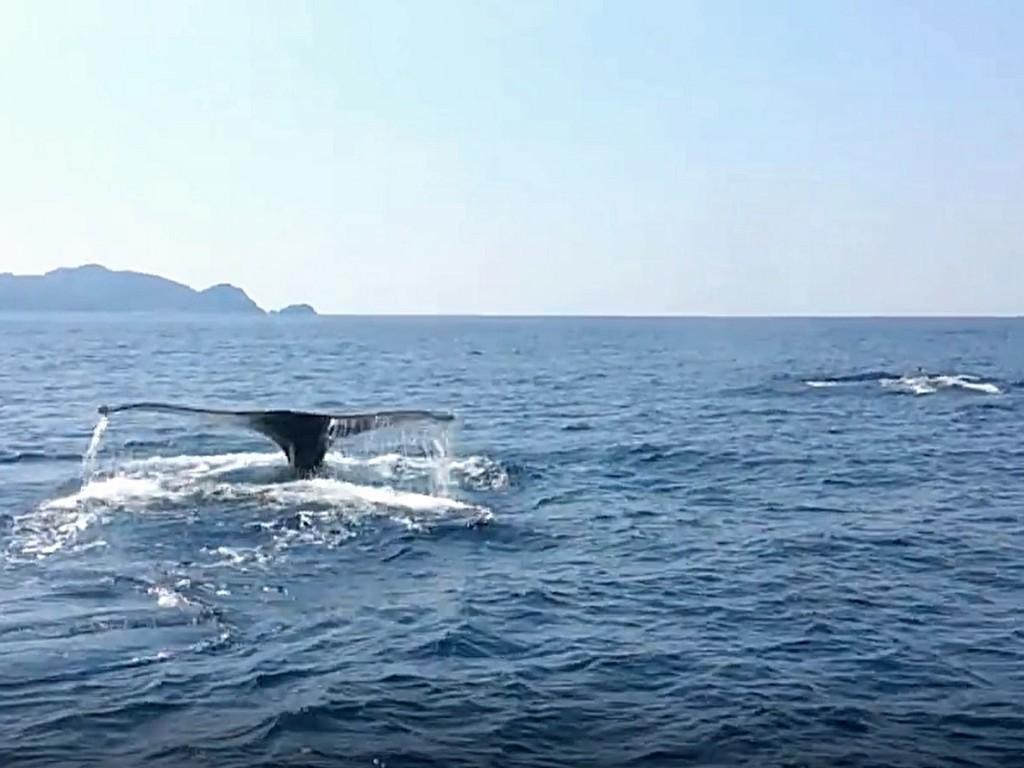 海面から飛び出すクジラの尻尾