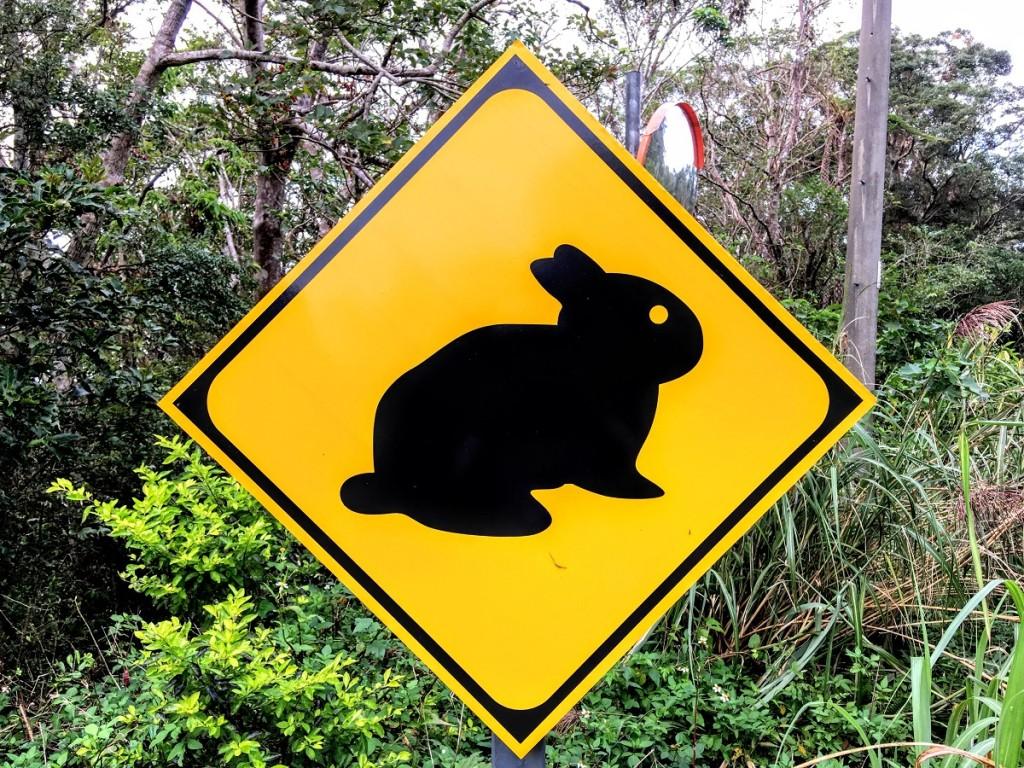 アマミノクロウサギ注意