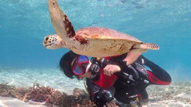 【奄美の海を楽しむ8の方法】ダイビング、釣り、海鮮丼!