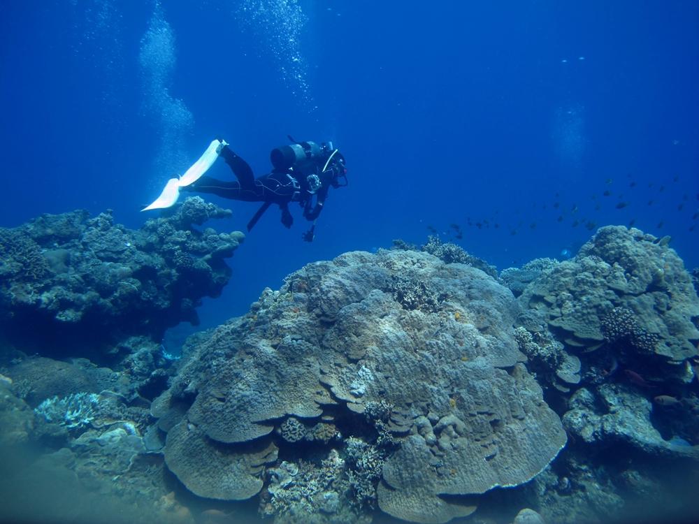 サンゴの海でダイビング