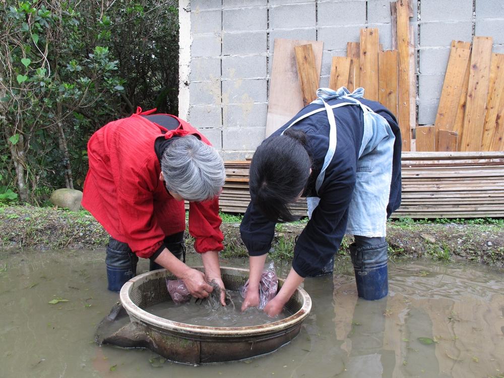 泥田で泥染めをする女性
